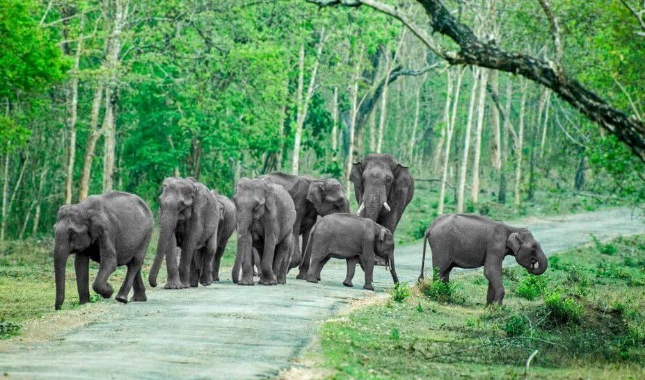 national parks in india